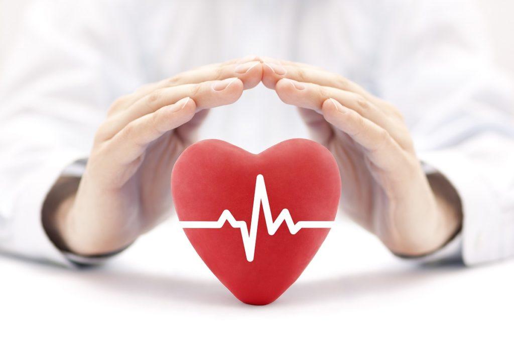 doctor holding heart model